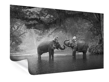 Poster Zwei Elefanten