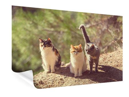 Poster Katzen im Garten