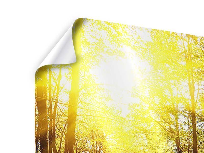 Poster Waldspaziergang in der Herbstsonne