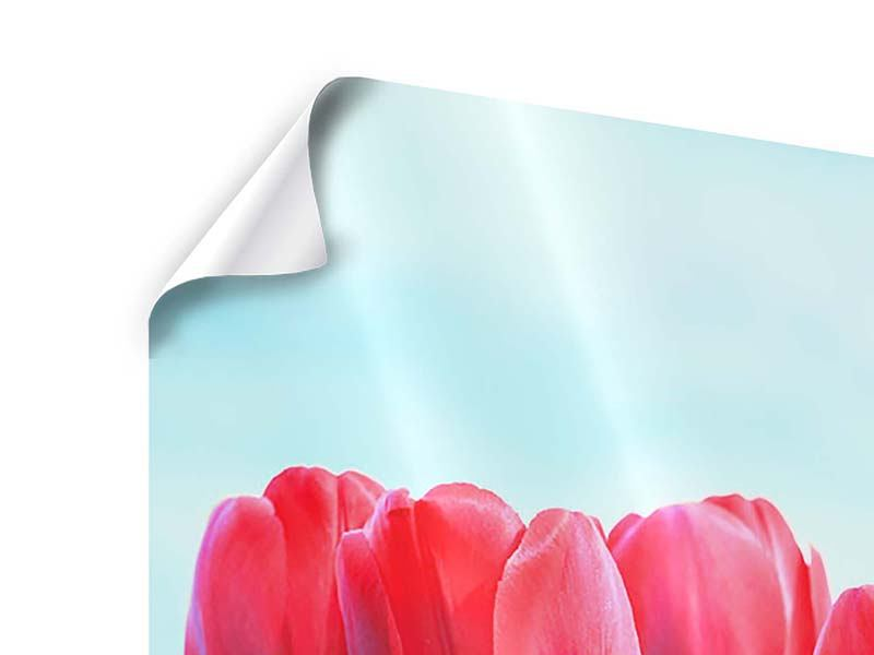 Poster Rote Tulpen