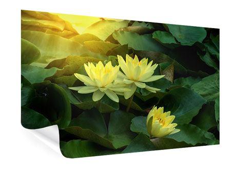 Poster Wilde Lotus