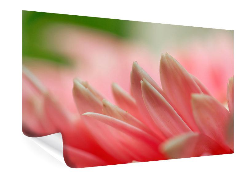 Poster Close Up einer Blüte