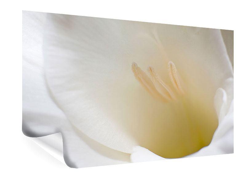 Poster In einer Blüte