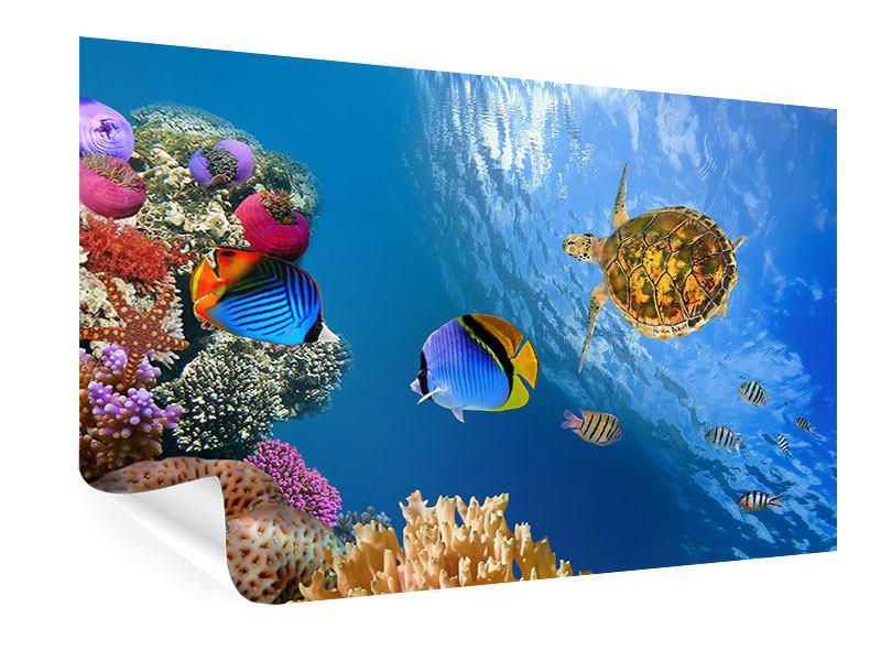 Poster Fisch im Wasser