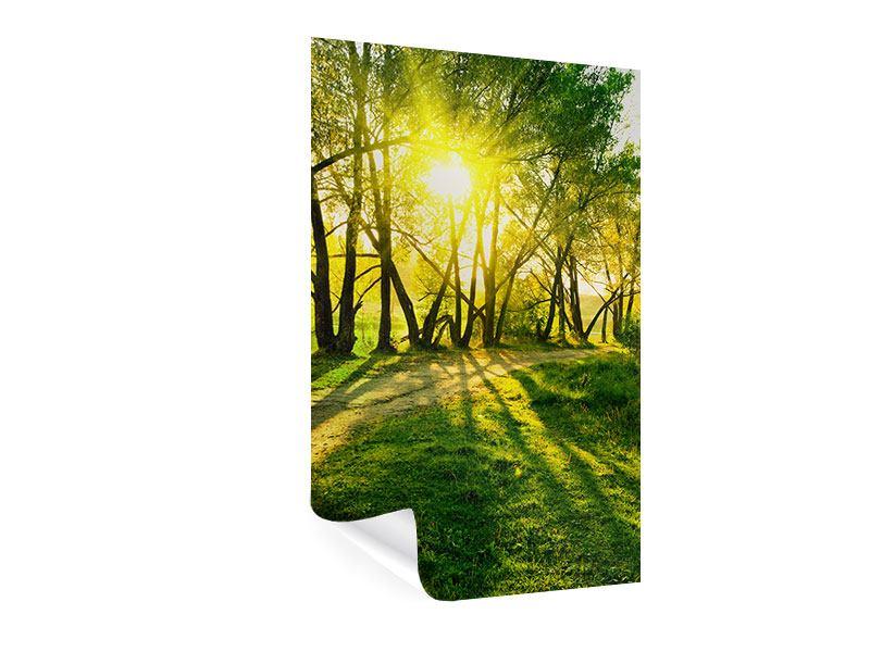 Poster Waldweg im Sonnenlicht