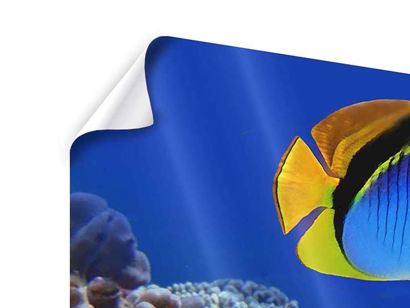 Poster Welt der Fische