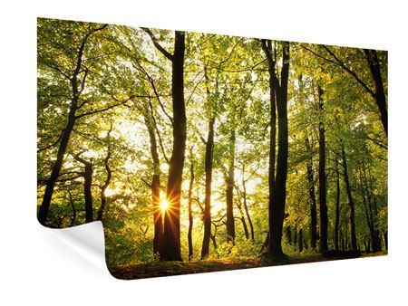 Poster Sonnenuntergang zwischen den Bäumen