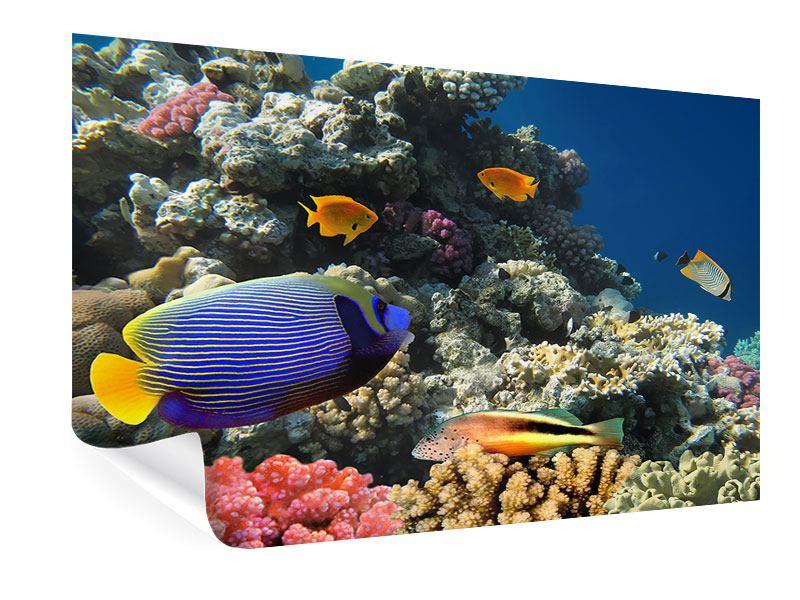 Poster Das Aquarium