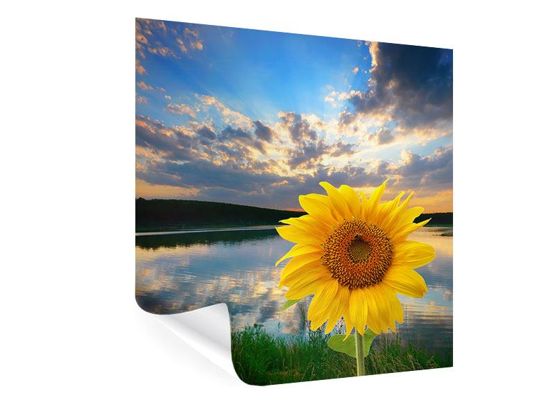 Poster Sonnenblume am See