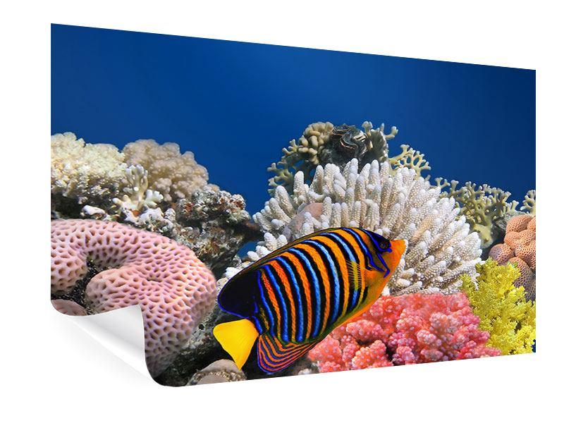 Poster Mit den Fischen tauchen