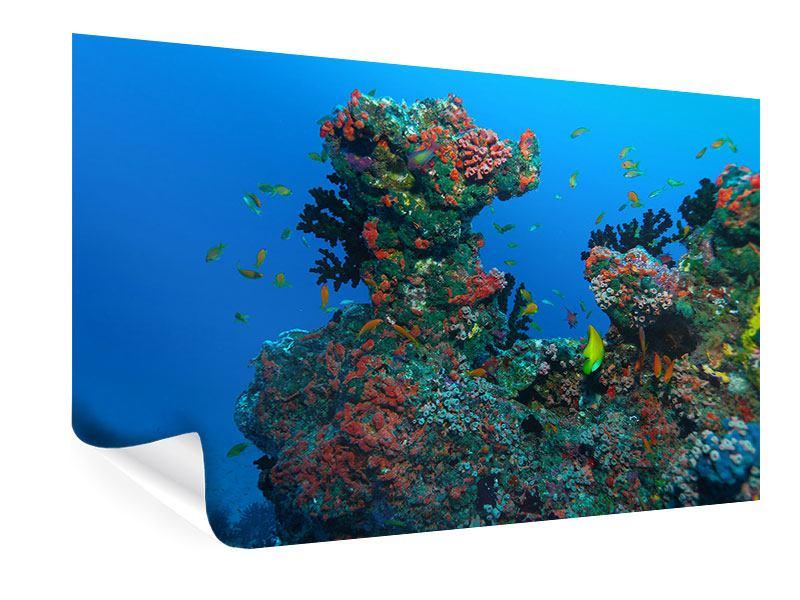 Poster Die Welt der Fische