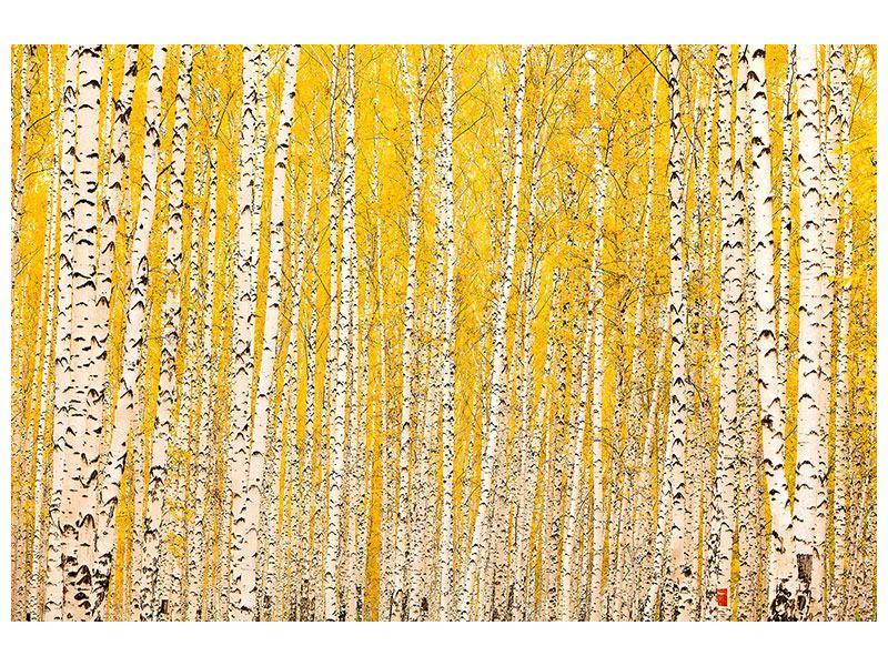 Poster Der Birkenwald im Herbst