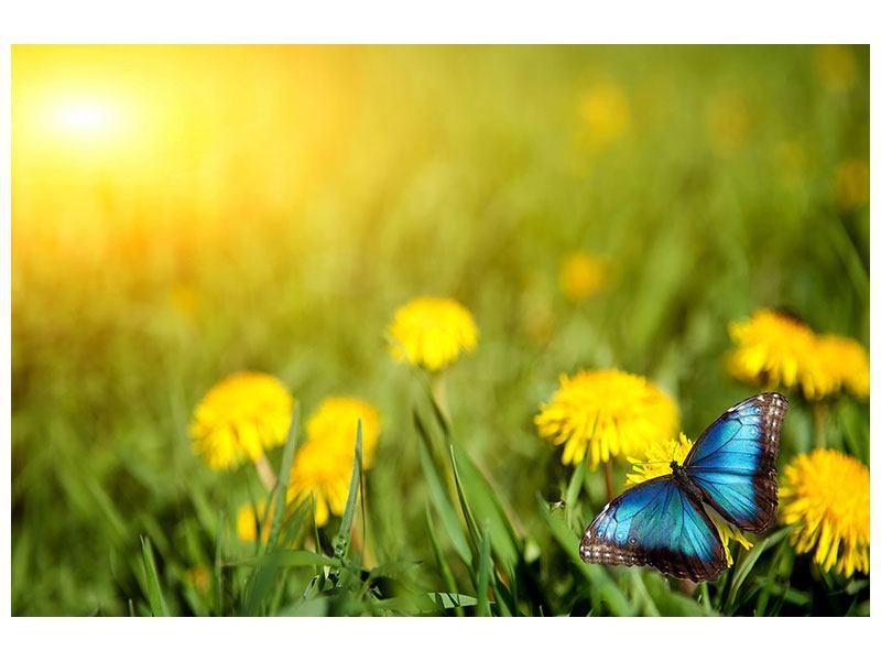 Poster Der Löwenzahn und der Schmetterling