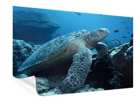 Poster Die Meeresschildkröte