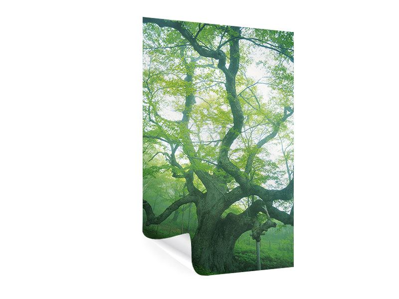 Poster Der alte Baum
