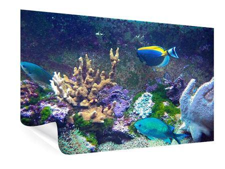 Poster Fische