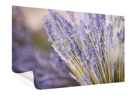 Poster Lavendel XXL