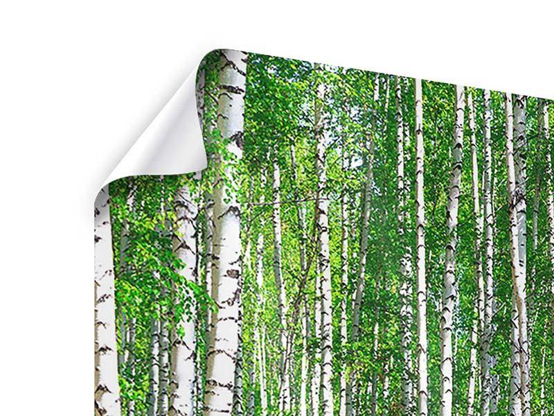 Poster Der Birkenwald im Sommer