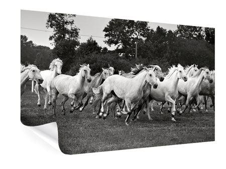 Poster Die Mustang Herde