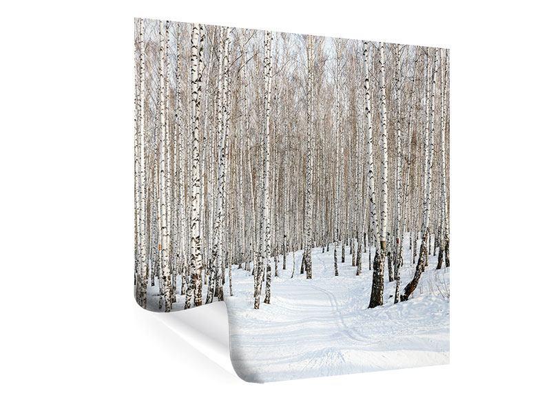 Poster Birkenwald-Spuren im Schnee