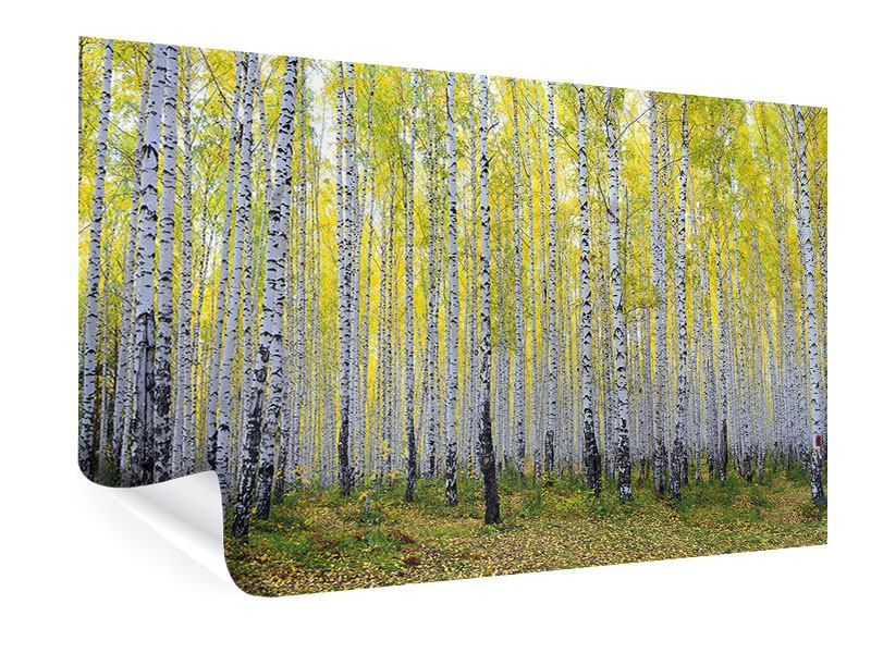 Poster Herbstlicher Birkenwald