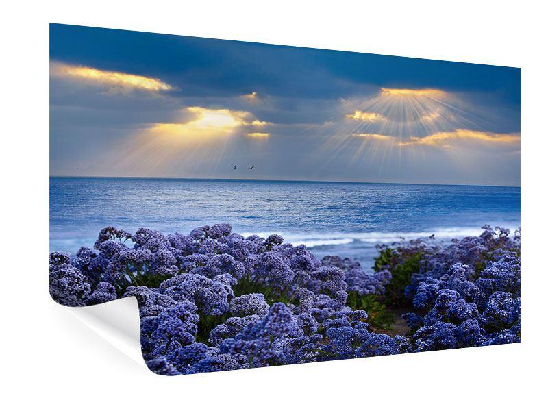 Poster Der Lavendel und das Meer