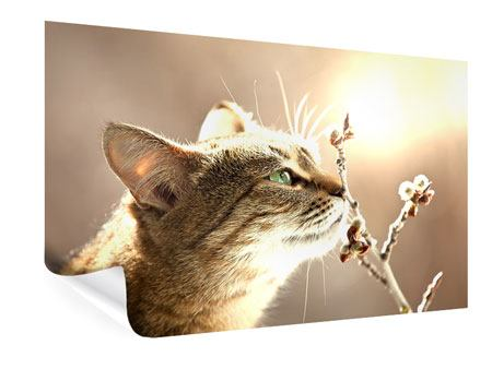 Poster Die Katze
