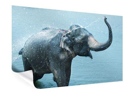 Poster Der junge Elefant