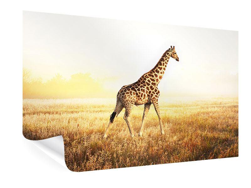 Poster Die Giraffe
