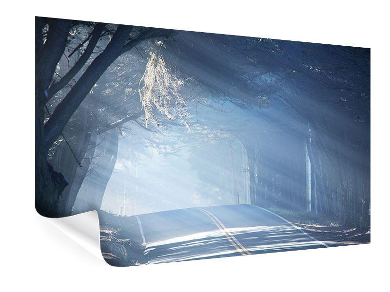 Poster Lichtdurchflutete Baumallee