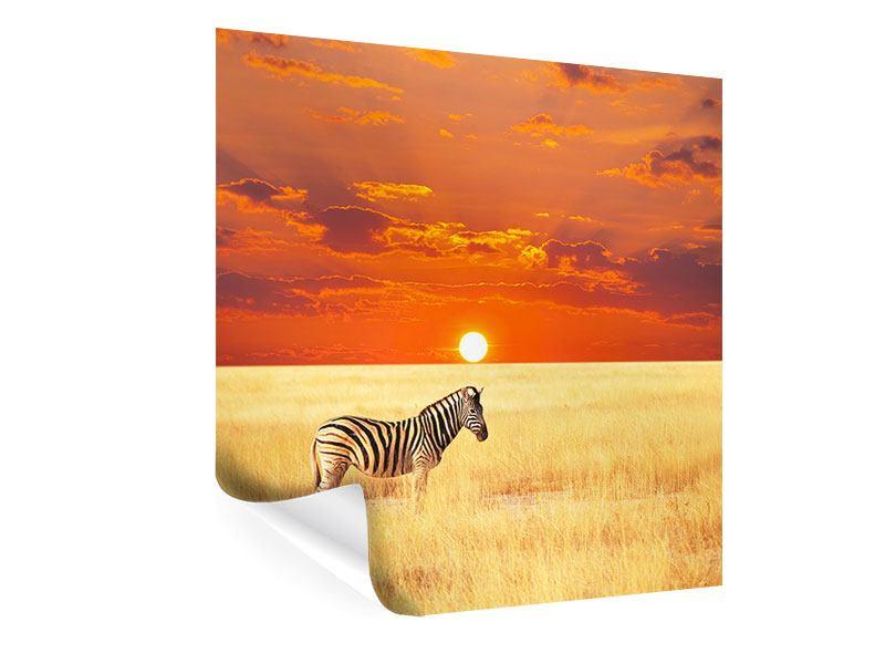 Poster Zebra im Seregenti-Nationalpark