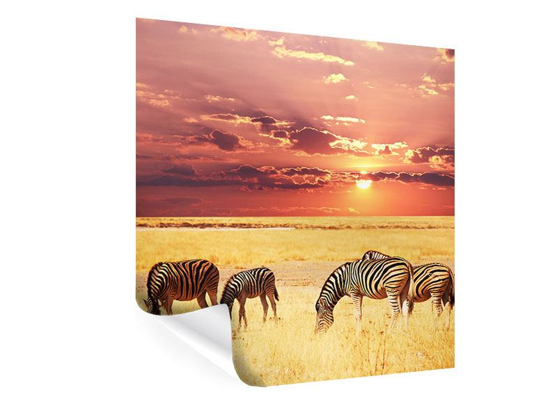 Poster Zebras in der Savanne
