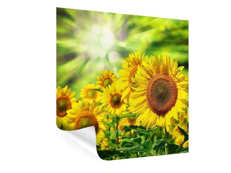 Poster Die Sonne und die Blumen