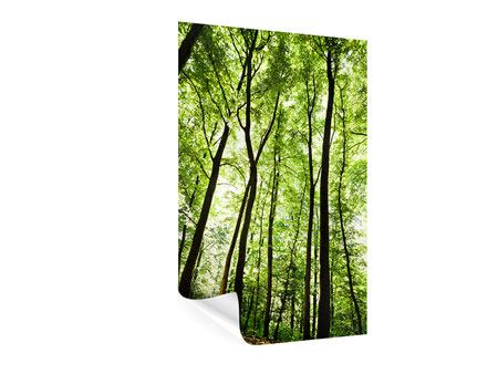 Poster Wald