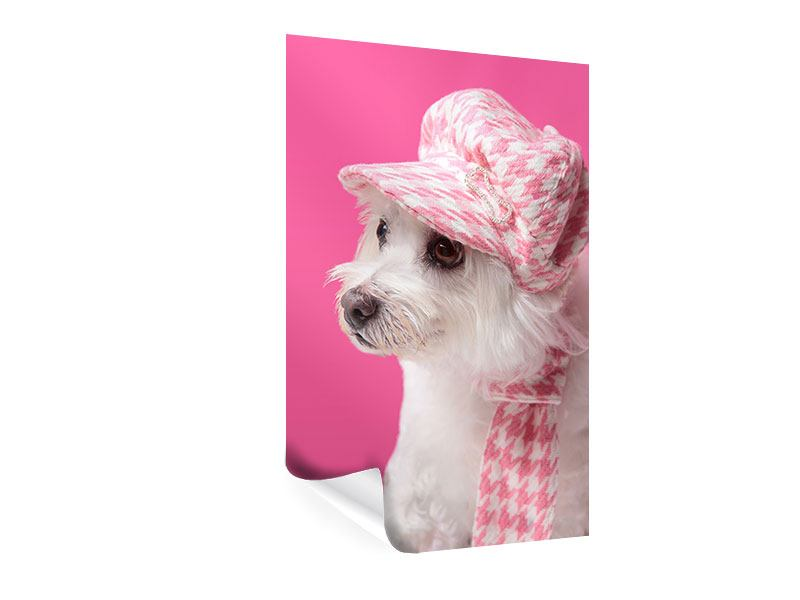 Poster Pretty Dog In Pink
