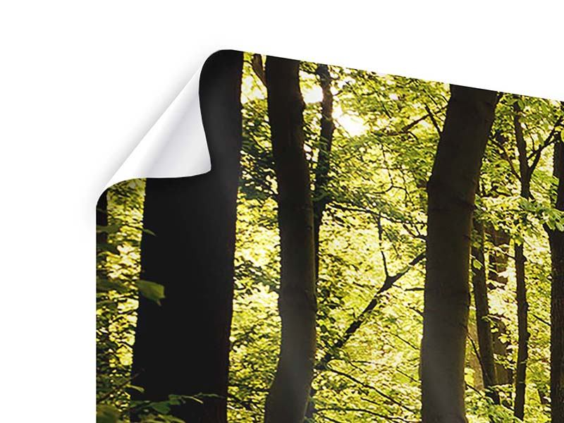 Poster Sonnenaufgang im Wald