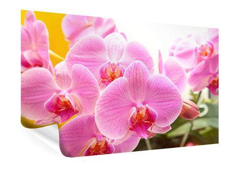 Poster Königliche Orchideen