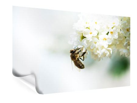 Poster Die Hummel und die Blüte