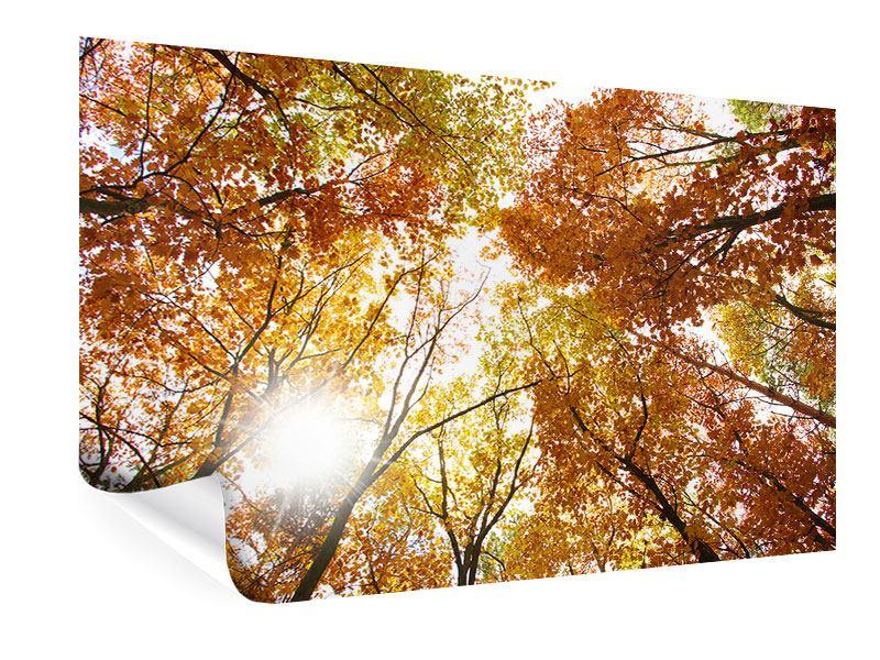 Poster Herbstbäume