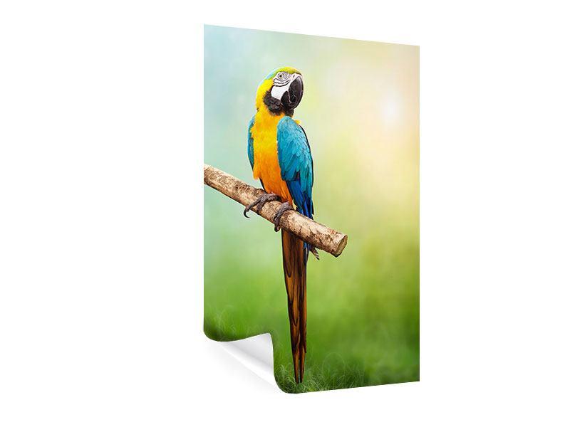 Poster Der Papagei