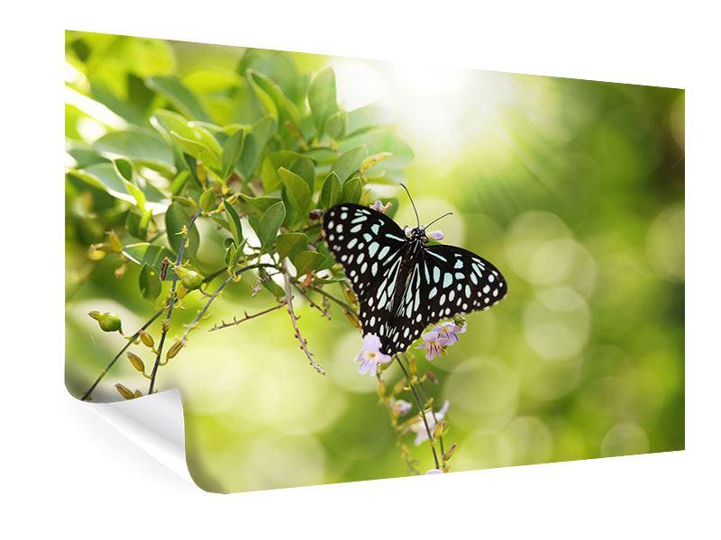 Poster Papilio Schmetterling XXL
