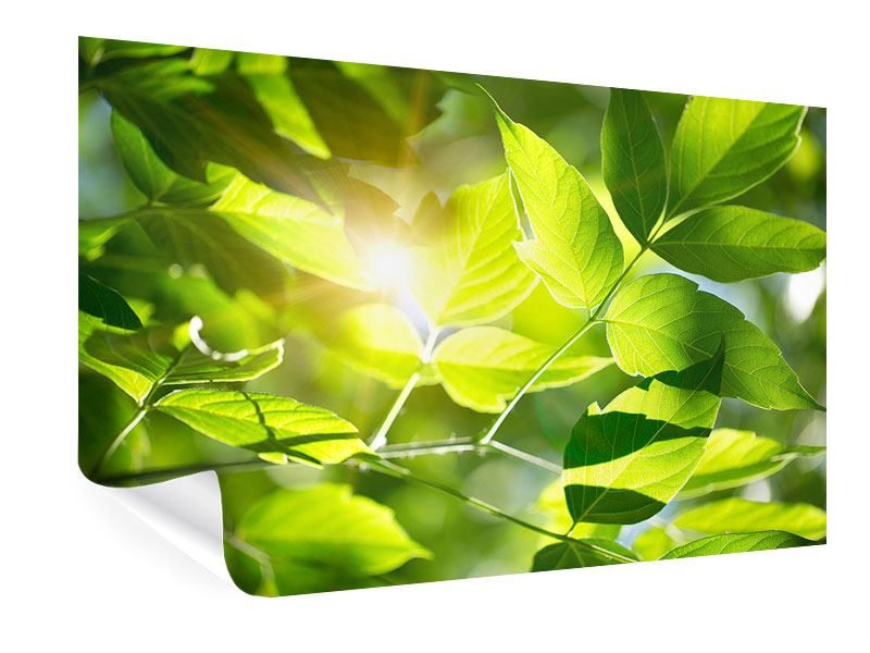 Poster Es grünt so grün