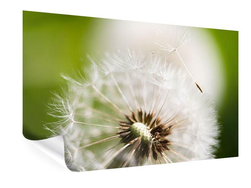 Poster Pusteblume Löwenzahn
