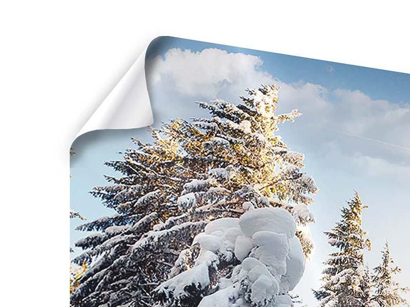 Poster Tannen im Schnee