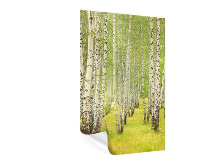 Poster Der Birkenwald im Spätsommer