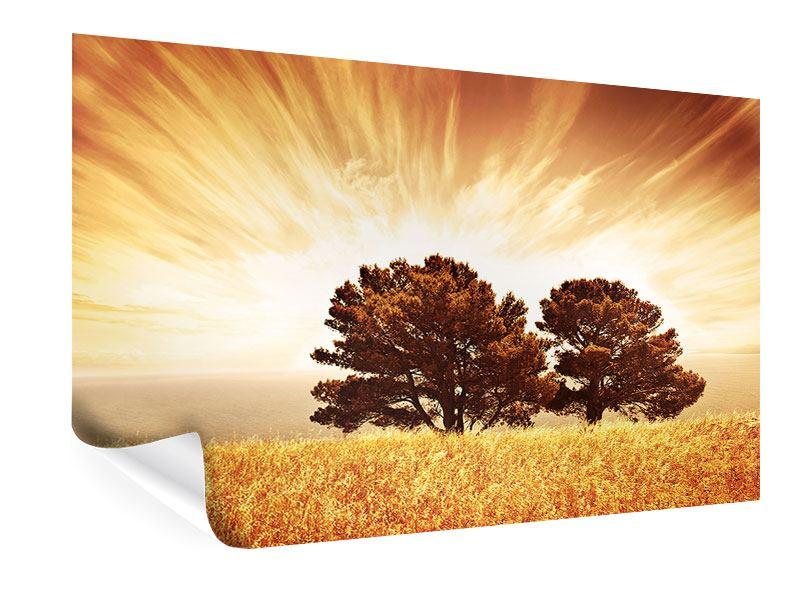 Poster Bäume im Lichtspektakel