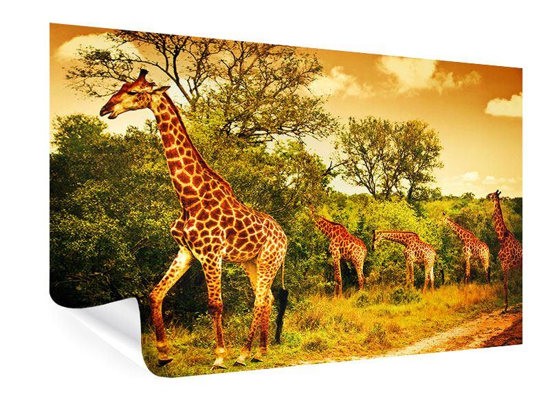 Poster Südafrikanische Giraffen