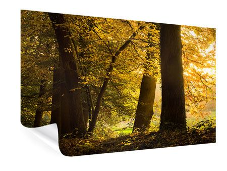 Poster Herbstlaub