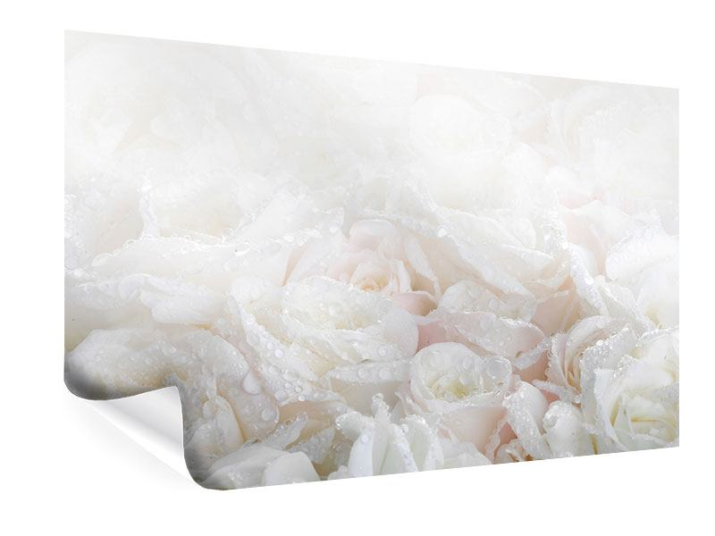 Poster Weisse Rosen im Morgentau