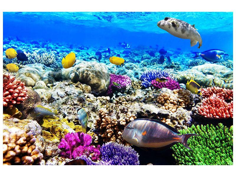Poster Fischaquarium